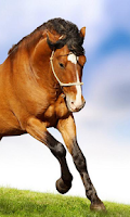 Screenshot of Horse 3d Wallpapers