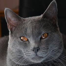 My Hugo by Serge Ostrogradsky - Animals - Cats Kittens