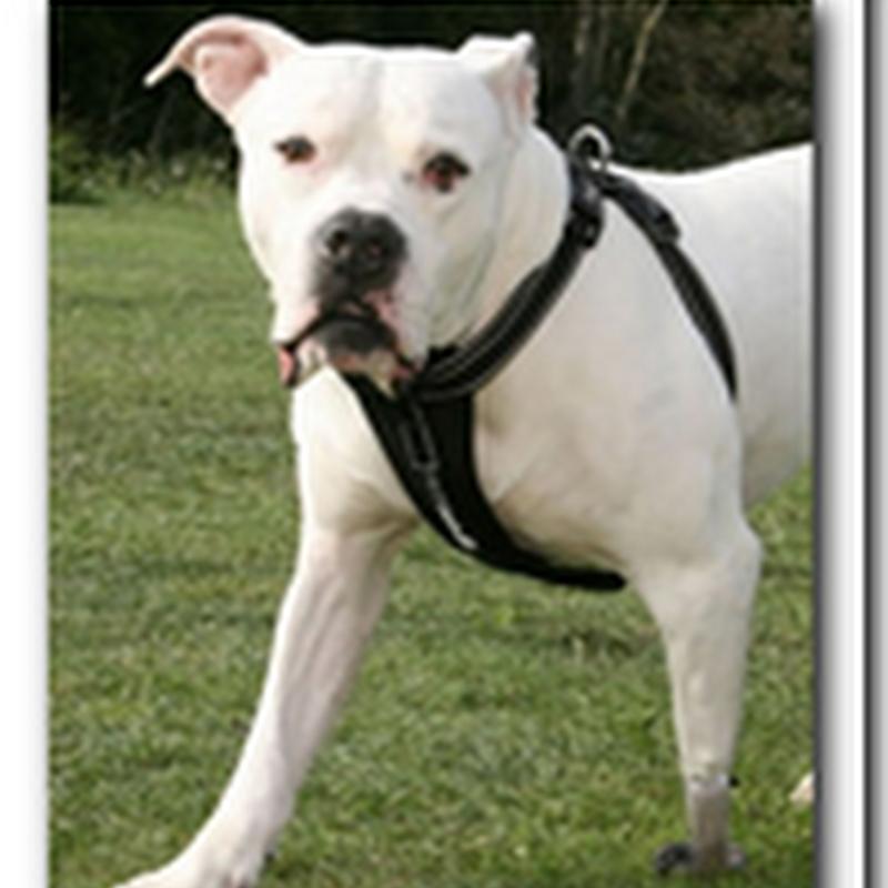 Dog gets an $18,500 bionic leg!