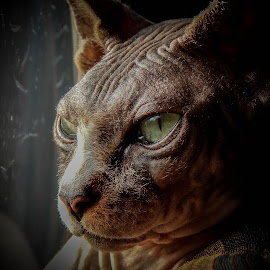 by Chris Martin - Animals - Cats Portraits (  )