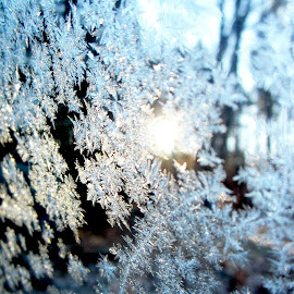 Frosty Window by Mary Tavis - Artistic Objects Other Objects
