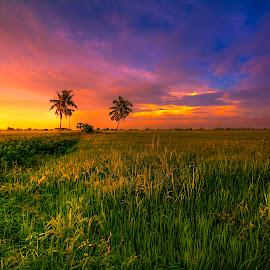 Paddy Field.... by Ziz Abd Aziz - Landscapes Sunsets & Sunrises (  )