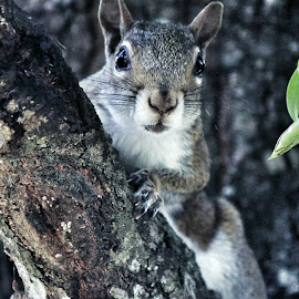 One Cute Squirrel Posing For Me by Florent Alezi - Animals Other Mammals