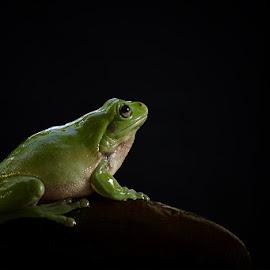 Menunggu Mu by Joko Mardiyanto - Animals Amphibians