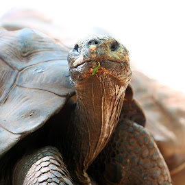 Mr Turtle by Fred Regalado - Novices Only Wildlife