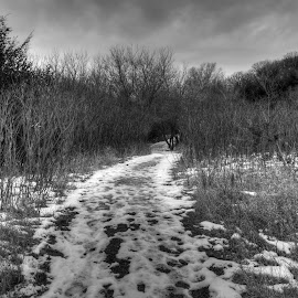 Winter Hike  by Eric Roskup - Landscapes Prairies, Meadows & Fields ( sumac, winter, black and white, trail, newton hills, south dakota, evergreen, hike )
