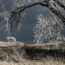 Winters Coming by Nathan Jesse - Landscapes Prairies, Meadows & Fields ( sky, winter, tree, colorado, landscapes )