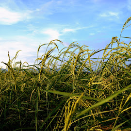 The Paddy Field by Aaron Leong - Nature Up Close Other plants