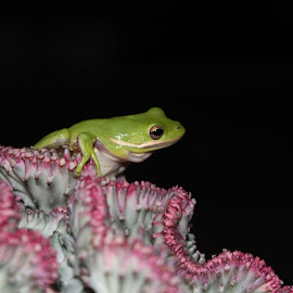 by Heather Carter - Animals Amphibians