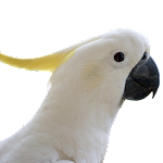 Talking Parrot 2.2 Apk