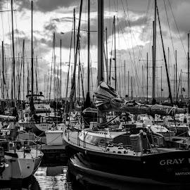 Gray Wolf by Matt Goodwin - Transportation Boats ( sailboats, seattle, sailing, shilshole, sail, sails, sailboat,  )
