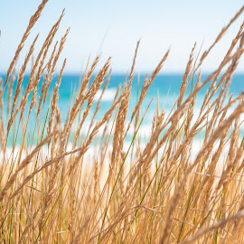 Tranquility by Rachel Morris - Nature Up Close Leaves & Grasses ( colour, grass, peace, beach, reeds )