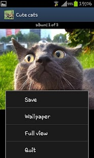 Cute cats HD - screenshot