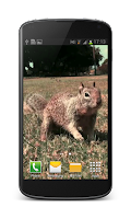 Screenshot of Squirrel Video Live Wallpaper