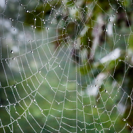 Cowee Mountain Web by Robert Willson - Nature Up Close Webs ( web dew drops, web, places, highlands, usa, spider web, robert willson, willson, nature, nc, bob willson, dew drops, web dew )