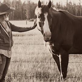 by Kortney Hoopes - Animals Horses