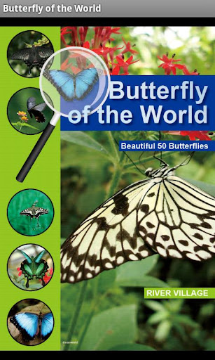 Butterfly of the World