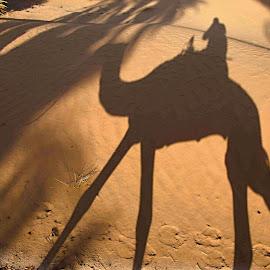 Camel and Me. by Marcel Cintalan - Landscapes Deserts ( desert, shadow, sahara, morocco,  )