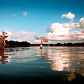 Florida Fall by Jamie Myers - Landscapes Waterscapes ( orange, moon, blue sky, tree, waterscape, florida, winter park, fall, landscape,  )