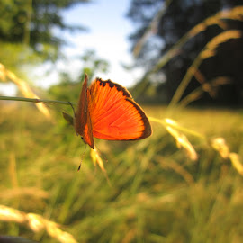 Ready to go by Dal Anis - Nature Up Close Leaves & Grasses ( #village, #warmth, #nature, #grass, #fields, #nofilter, #evening, #butterfly )