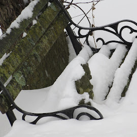 Buried in Snow by Marcia Taylor - Novices Only Objects & Still Life (  )