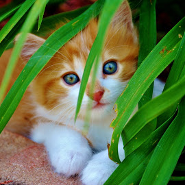 by Renee Ross - Animals - Cats Kittens