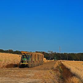 Louisiana Sugarcane Carts by Ron Olivier - Transportation Other ( louisiana sugarcane carts )