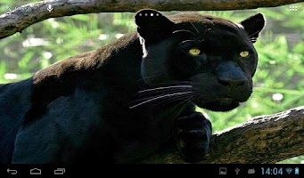 Screenshot of Black Panther