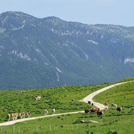 by Jean Jacques Quenel - Landscapes Mountains & Hills