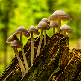 Climbing fungis by Peter Samuelsson - Nature Up Close Mushrooms & Fungi