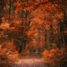 Autumn 3 by Kelly Murdoch - Nature Up Close Trees & Bushes ( orange, uk, wood, criso, crisp, leaf, leaves, woods, ztam, england, red, season, bark, trees, fall, color, colorful, nature )