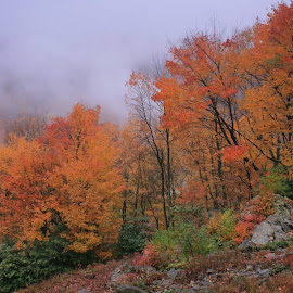 Fog Through The Trees by Melanie Goins - Landscapes Forests ( mountain, fog, colors, fall, trees, rain,  )