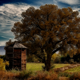 Fall Tree by Terry Ricks - Nature Up Close Trees & Bushes ( fall colors, tree, fall, colorado, grain bin, trees, western colorado )