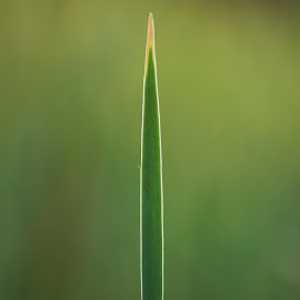 The Strength Of Nature by Hardik Malavia - Nature Up Close Leaves & Grasses ( nature, strength, green, power, leaf )
