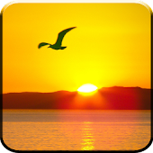 Download Sun Rise Live Wallpaper APK on PC