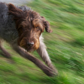 I'm watching you! by Craig Noa - Animals - Dogs Running (  )