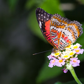 Colours by Mark Elsworth - Animals Other ( butterfly, macro, nature, bright, close up, flower, colours )