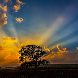 Where Everything's Perfect by Assi Dvilanski - Landscapes Sunsets & Sunrises ( clouds, sky, tree, sunset, meadow, israel, sun )