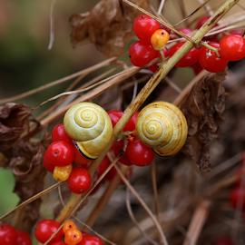 Garden berries by Nikola Vlahov - Nature Up Close Gardens & Produce ( red, nature, autumn, garden, berries )