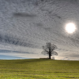 Breaking through! by Kim  Schou - Landscapes Cloud Formations ( field, clouds, tree, hdr, vesterborg, sun )