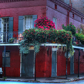 French Quarter Beauty by Barton Bishop - Buildings & Architecture Public & Historical ( new orleans, building, red, brick, louisiana, historical, french, quarter )
