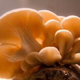 Family Tree_XI by Sadat Hossain - Nature Up Close Mushrooms & Fungi ( mushroom, macro, nature, macro photography, nature up close, nature close up, mushrooms, colorful, mood factory, vibrant, happiness, January, moods, emotions, inspiration )