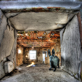 Iron Rabbit by Eric Demattos - Artistic Objects Antiques ( rabbit, interior, pealing paint, house, forgotten, abandoned )