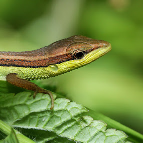 by Aldi Ersa - Animals Reptiles