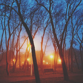 by Suzana Dordea - Instagram & Mobile iPhone ( winter, park, fog, trees, weather )