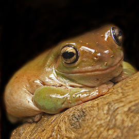 ribbbit by Mike Neal - Animals Amphibians