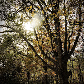 Sunburst by Diane Clontz - Novices Only Landscapes ( copake, sunburst, peaceful, fall colors, tree )