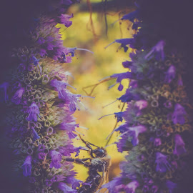 In the Valley by Tony Castillo - Nature Up Close Hives & Nests ( purple, bee, art, flor, insect, flower )