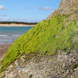 growing green by Andrew Barnes - Novices Only Landscapes ( green, sea, rock, beach, wall )