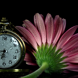 Nature and technology. by Dipali S - Artistic Objects Jewelry ( single object, clockwise, isolated on white, clock face, dial, equipment, jewelry, jewelery, business, pocket watch, time, nature, metal, instrument of time, minute hand, flower, clockworks, flora, clock, elegance, watch, close-up, instrument of measurement, concepts and ideas, artistic, accuracy, man made object, second hand, tachymeter, gerber, stainless steel, object )